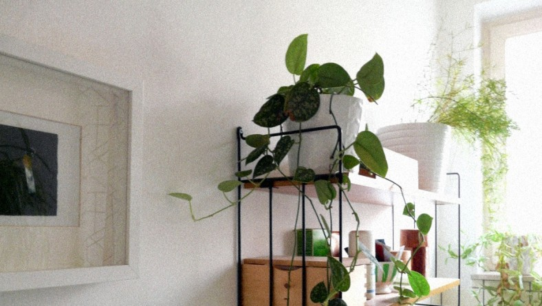 Glamorize your home with ornamental fake plants